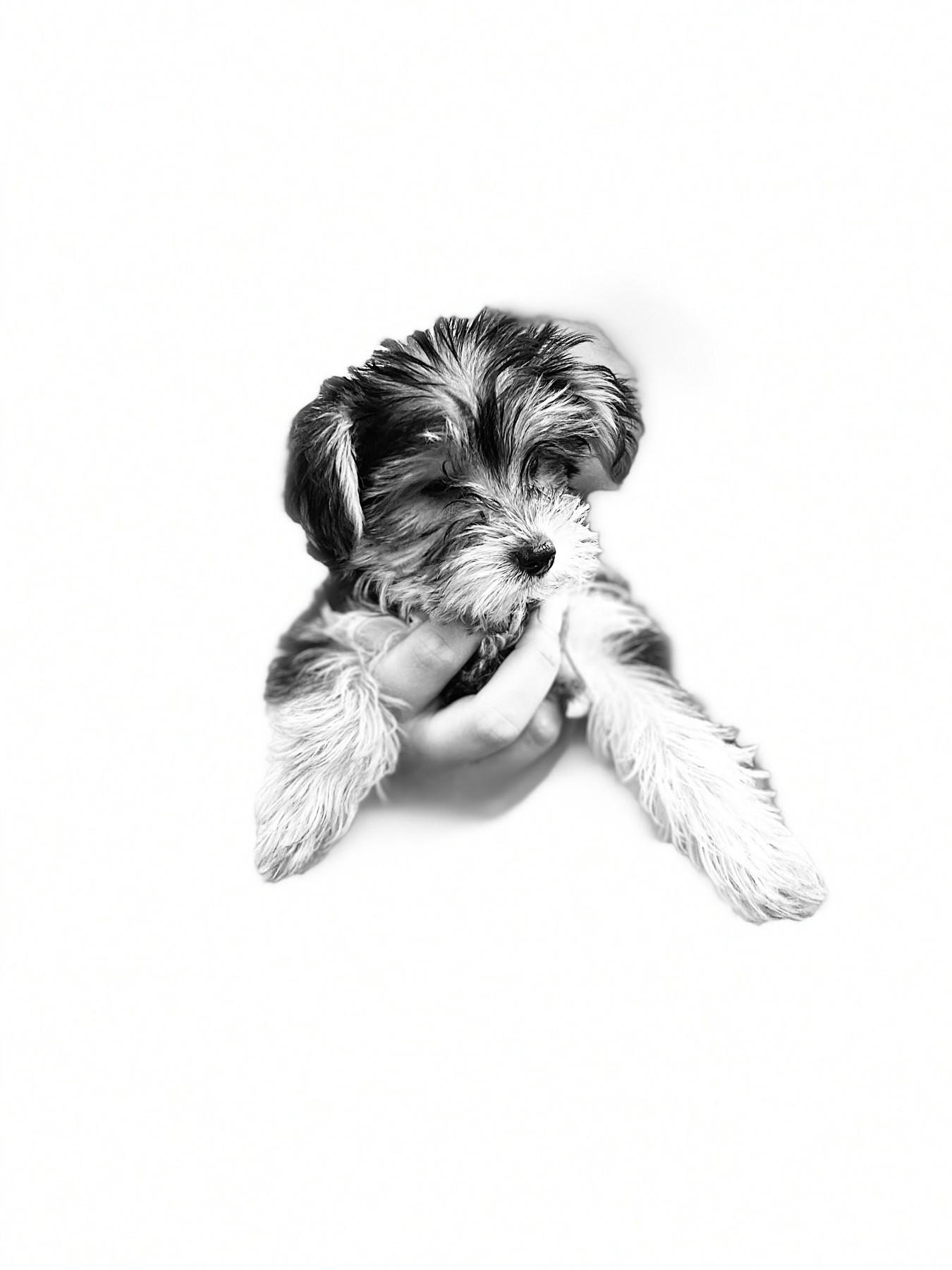 a high-contrast, black and white photo of a puppy being held out in one hand by its owner
