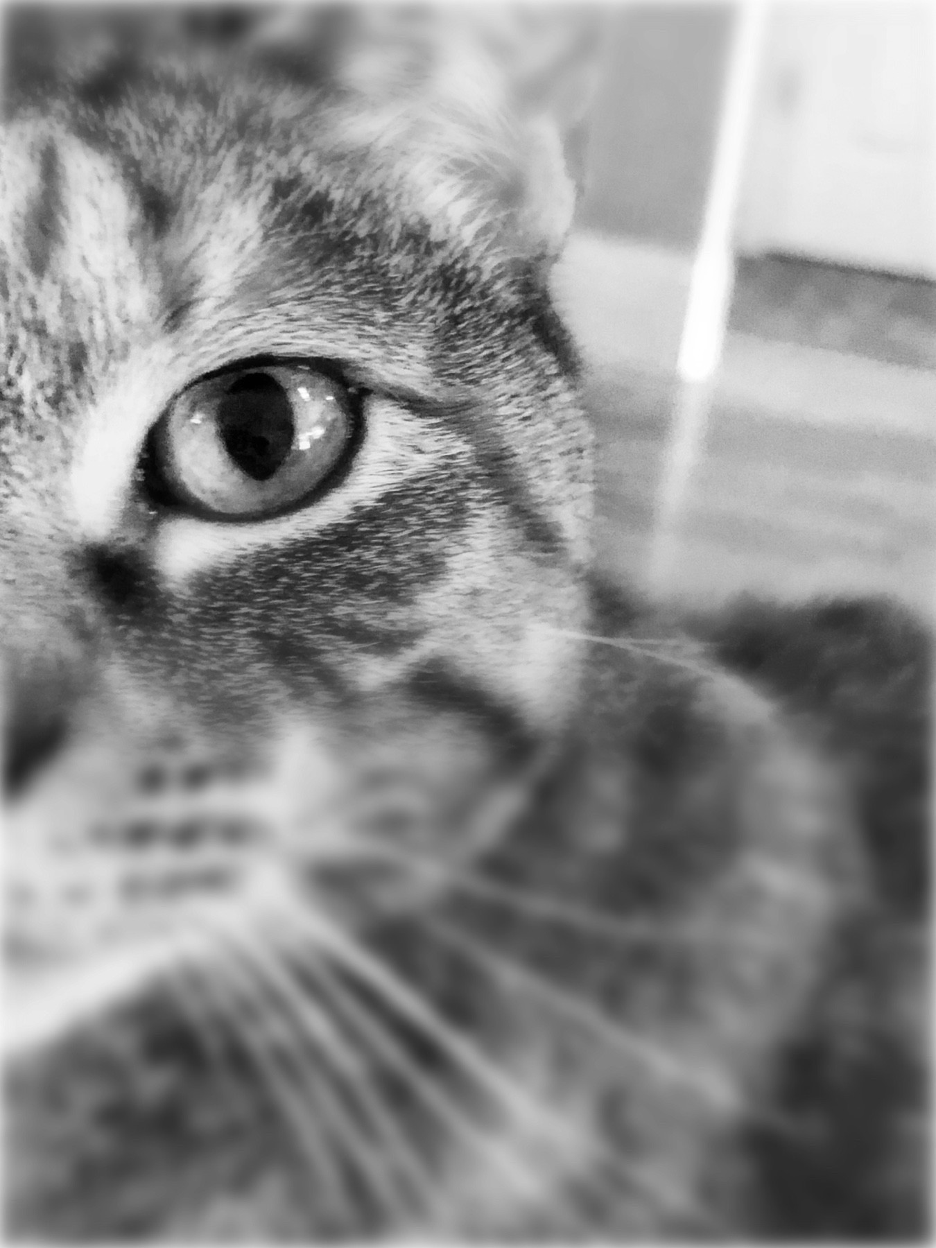 An up close shot of a cat's left eye as it faces directly into the camera.  The background is blurred.