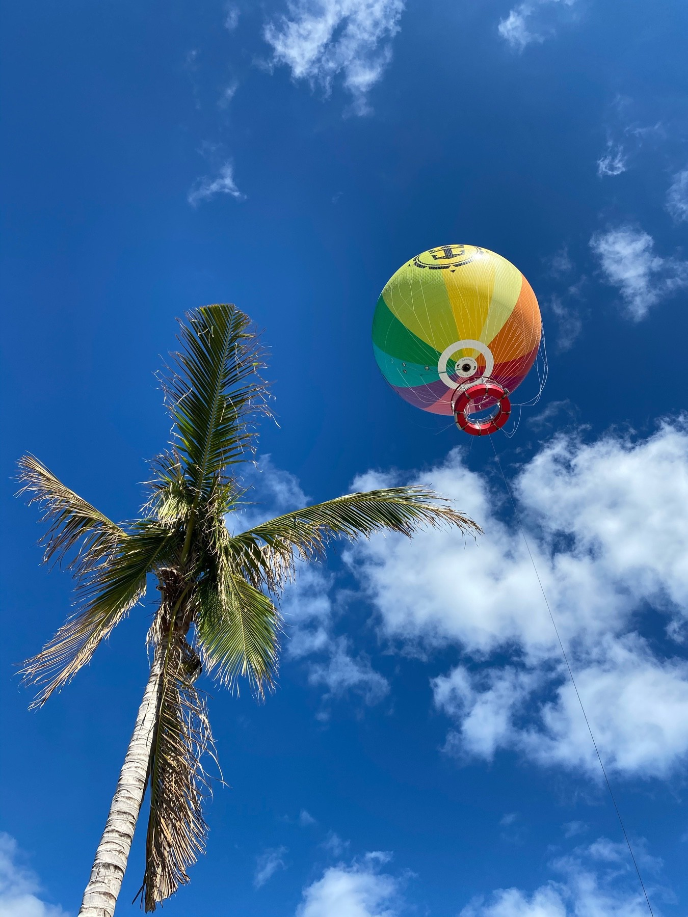 A hot air balloon sits atop the upper right corner against a bright, blue sky with a palm tree sprouting up from the bottom left corner.
